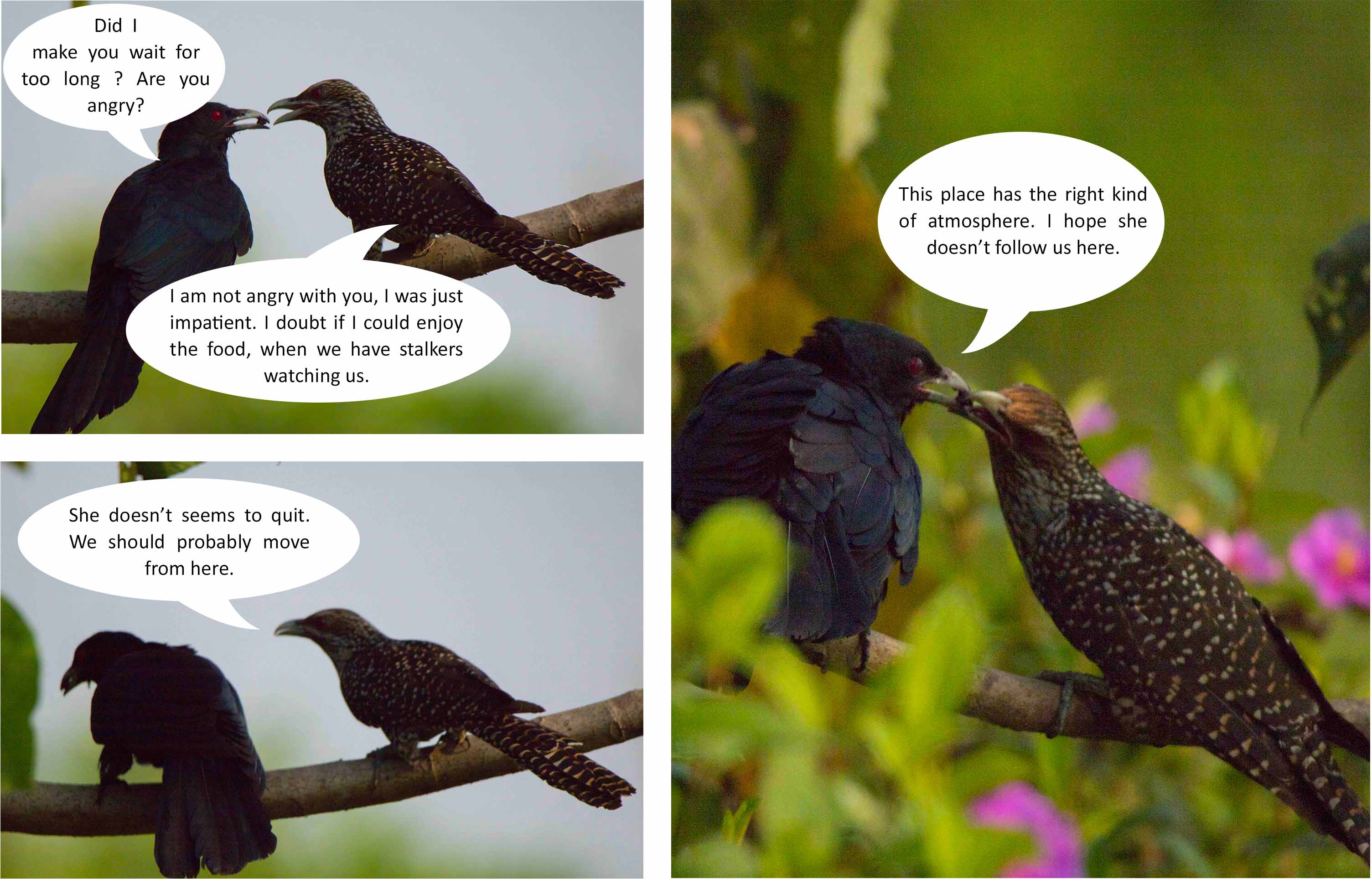 birds-images-photomentor