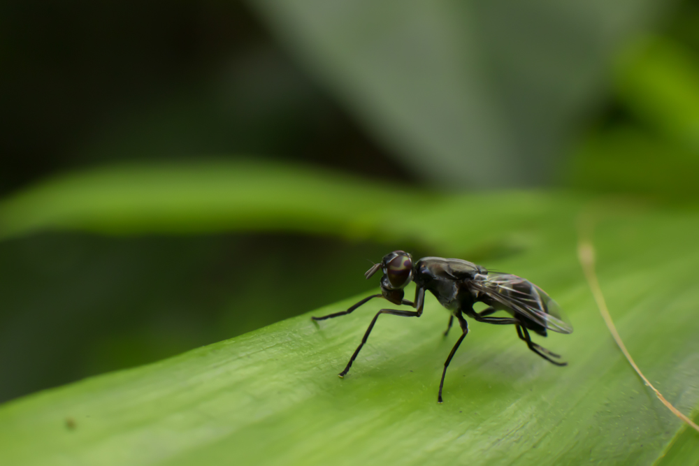 insect-photo-photomentor