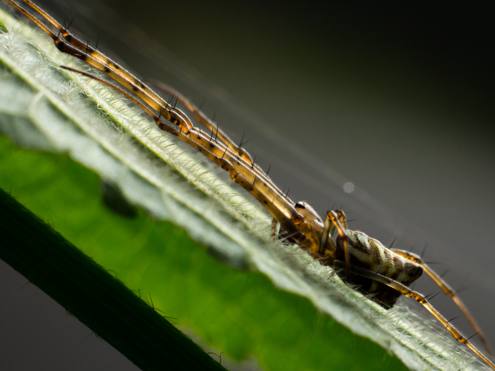 insects-photo-photomentor