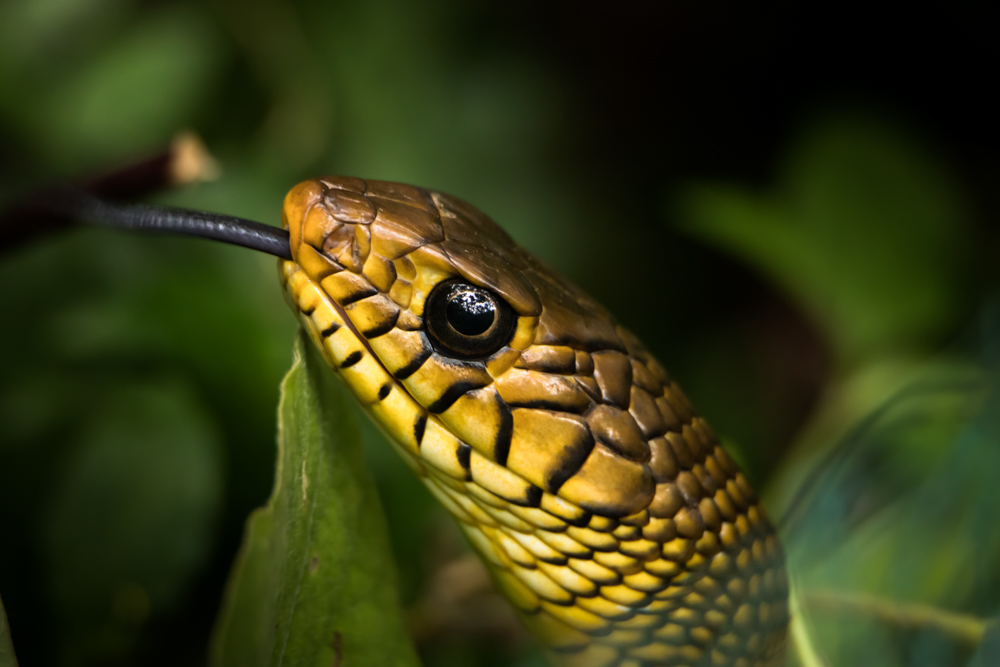 snake-images-photomentor
