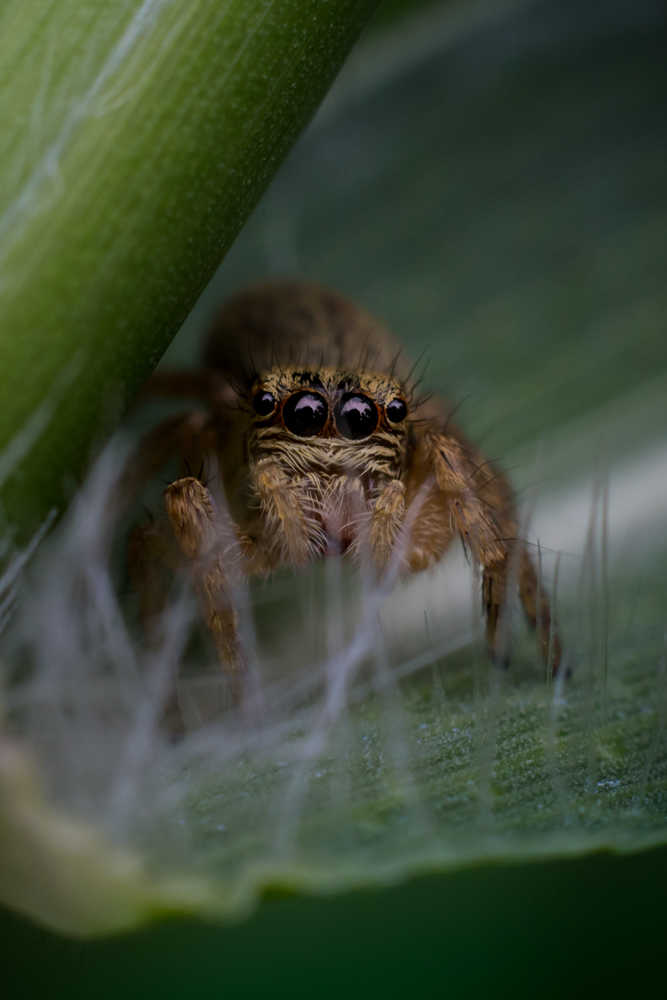 spider-images-photomentor