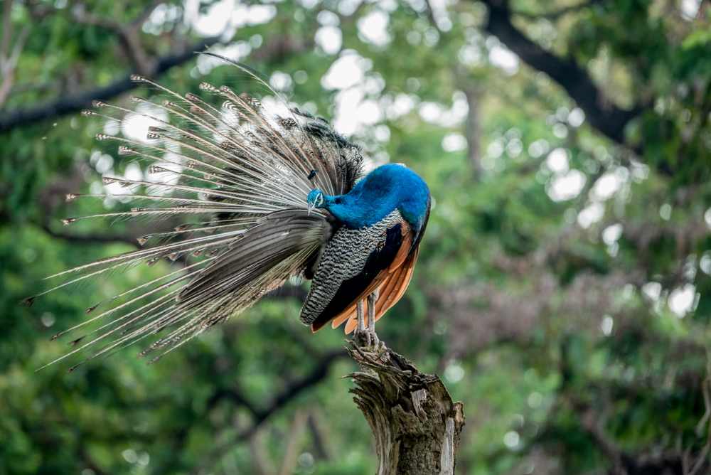 wild-life-in-india-photomentor