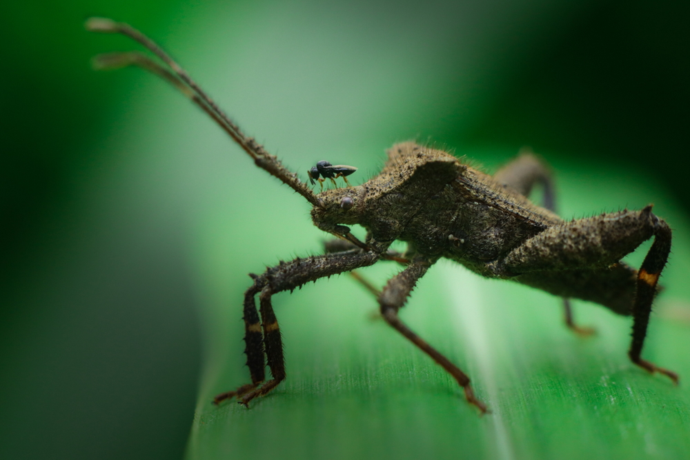 close-up-insects-photography