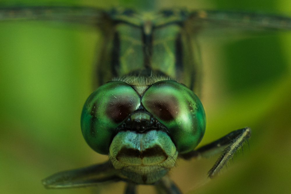close-up-photography-insects-photomentor
