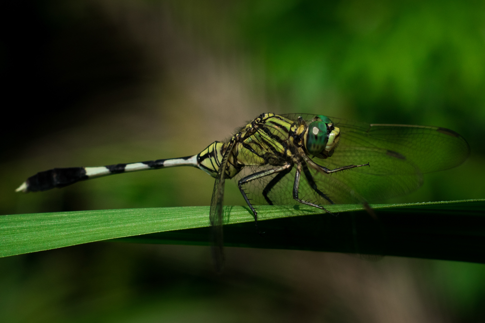 common-insect-photographs-photomentor