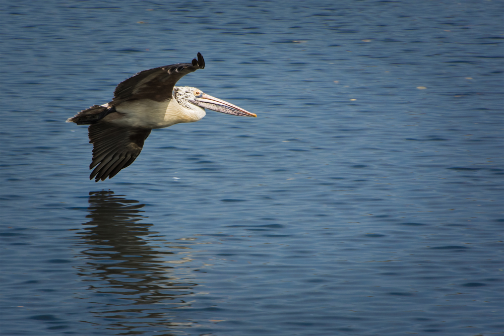 flying-birds-images-photomentor
