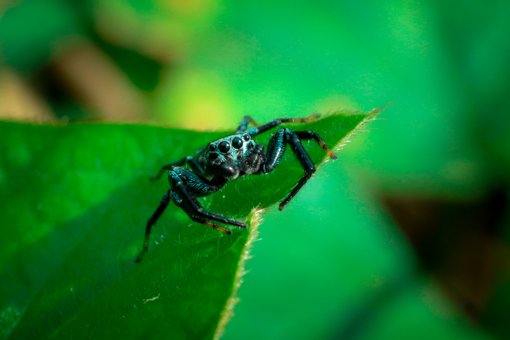 insects-photography-kerala-photomentor