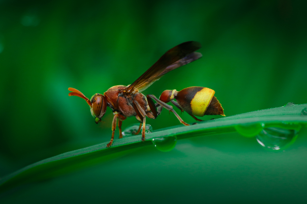 macro-insects-photography
