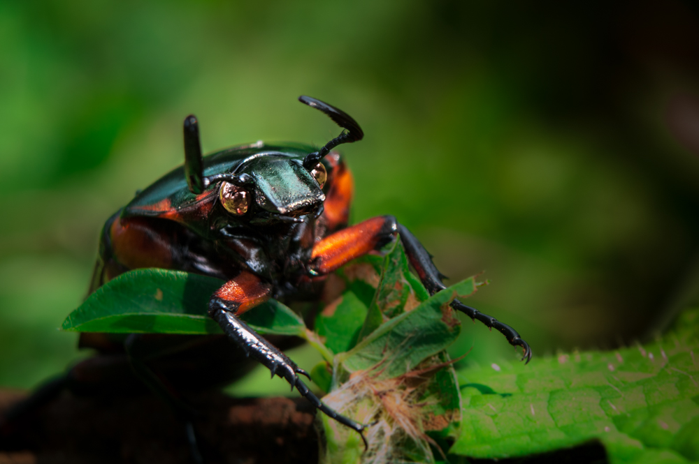 macro-lens-photography-insects-photomentor