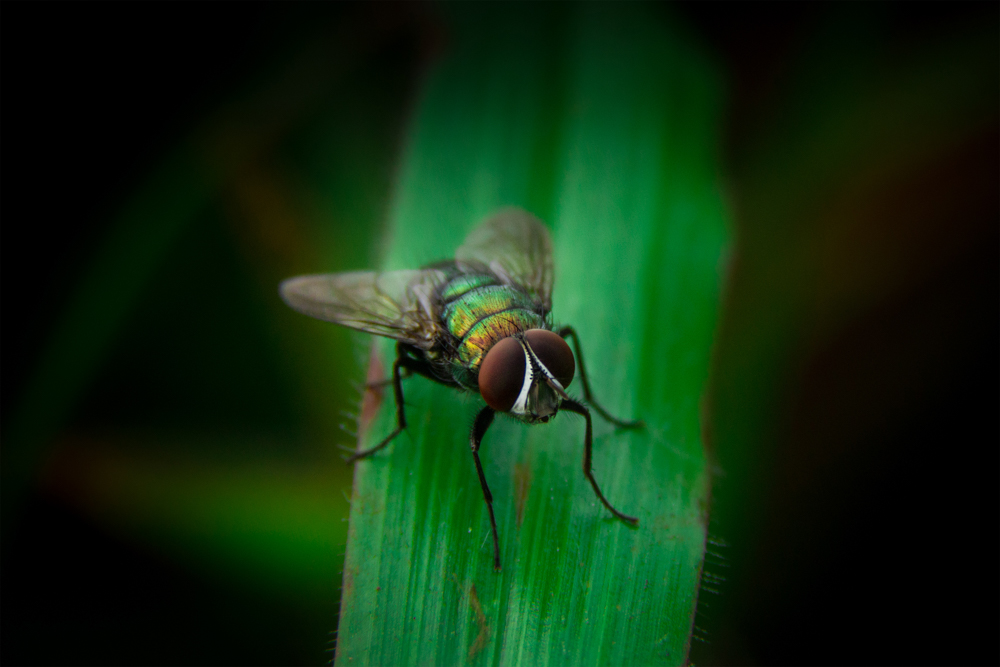 macro-nature-photography-insects-photomentor