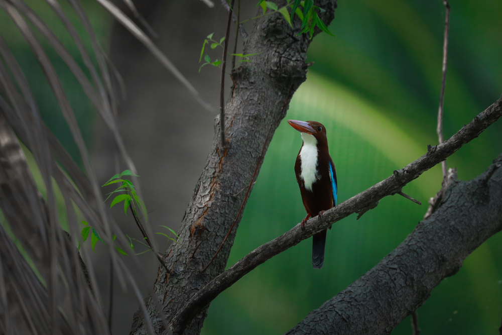 pictures-of-wild-birds-photomentor