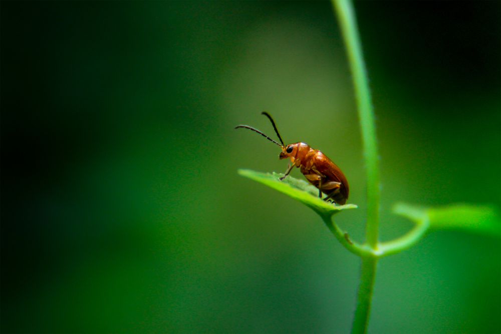 rare-insects-photos-photomentor