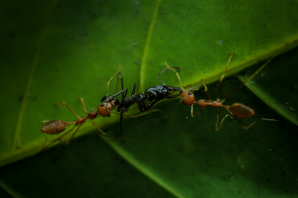 wild-ants-photos-photomentor