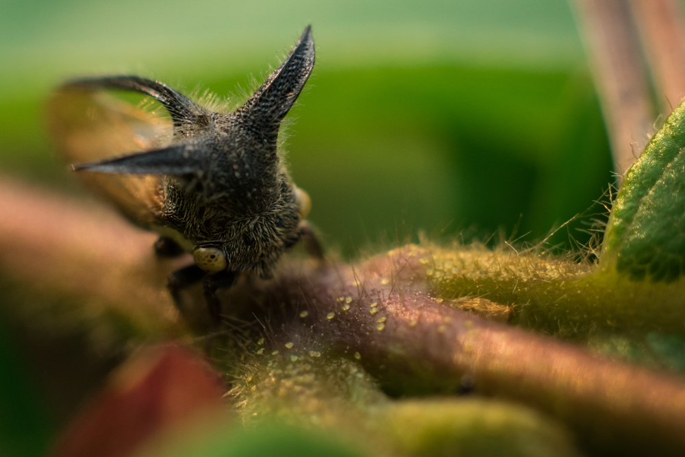 wild-insect-photo-photomentor