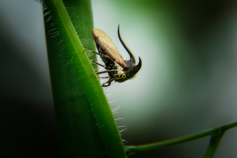 wildlife-photography-insects-photomentor