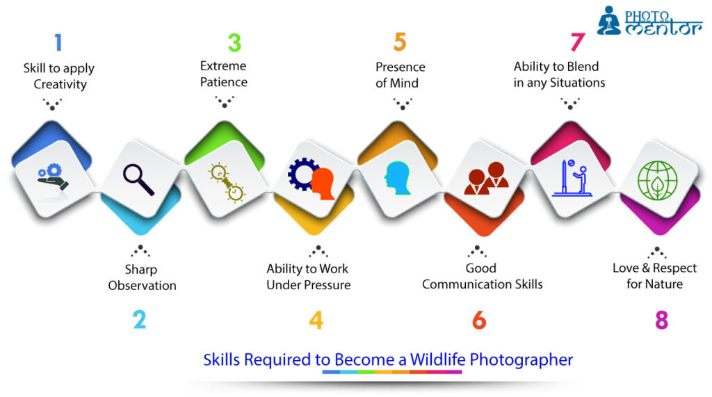 skills required to become a wildlife photographer